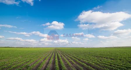 Terreno Agricolo in vendita a Meduna di Livenza, 9999 locali, prezzo € 450.000 | CambioCasa.it