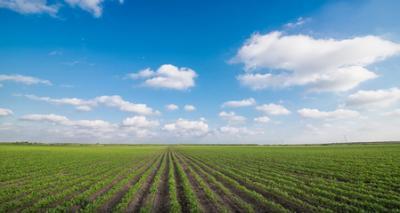 Terreno Agricolo in Vendita a Meduna di Livenza