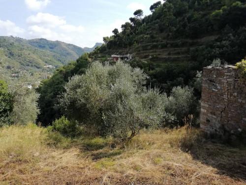 Rustico con Terreno in Vendita a Camporosso