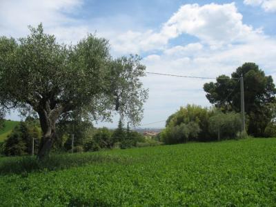 Terreno Agricolo in Vendita a Spoltore
