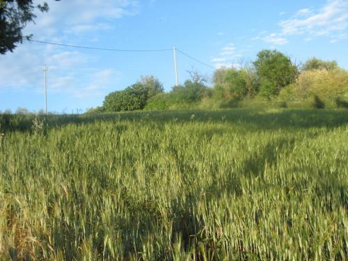 Terreno Agricolo in Vendita a Cappelle sul Tavo