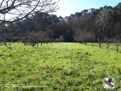 Terreno Agricolo in Vendita a Camaiore