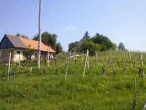 Azienda Agricola in Vendita a Ptuj