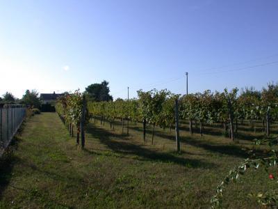 Terreno edificabile in Vendita a Gorizia