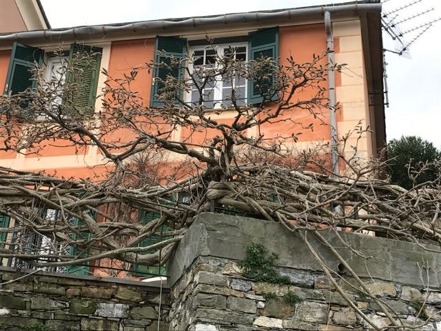 Soluzione Semindipendente in affitto a Santa Margherita Ligure, 3 locali, zona Zona: Nozarego, prezzo € 1.000 | Cambio Casa.it