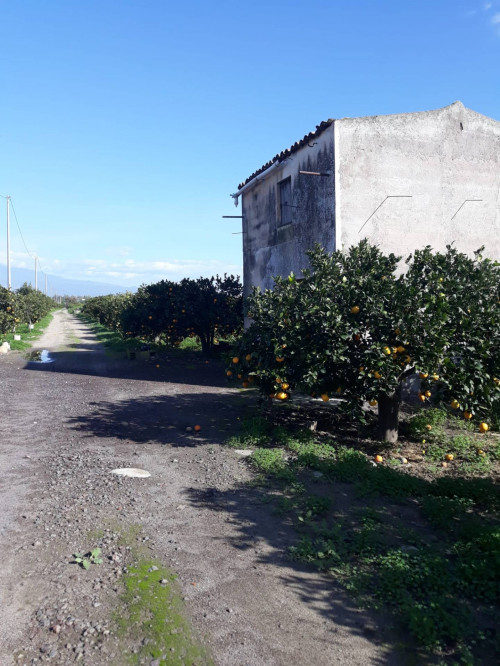 Terreno Agricolo in Vendita a Ramacca