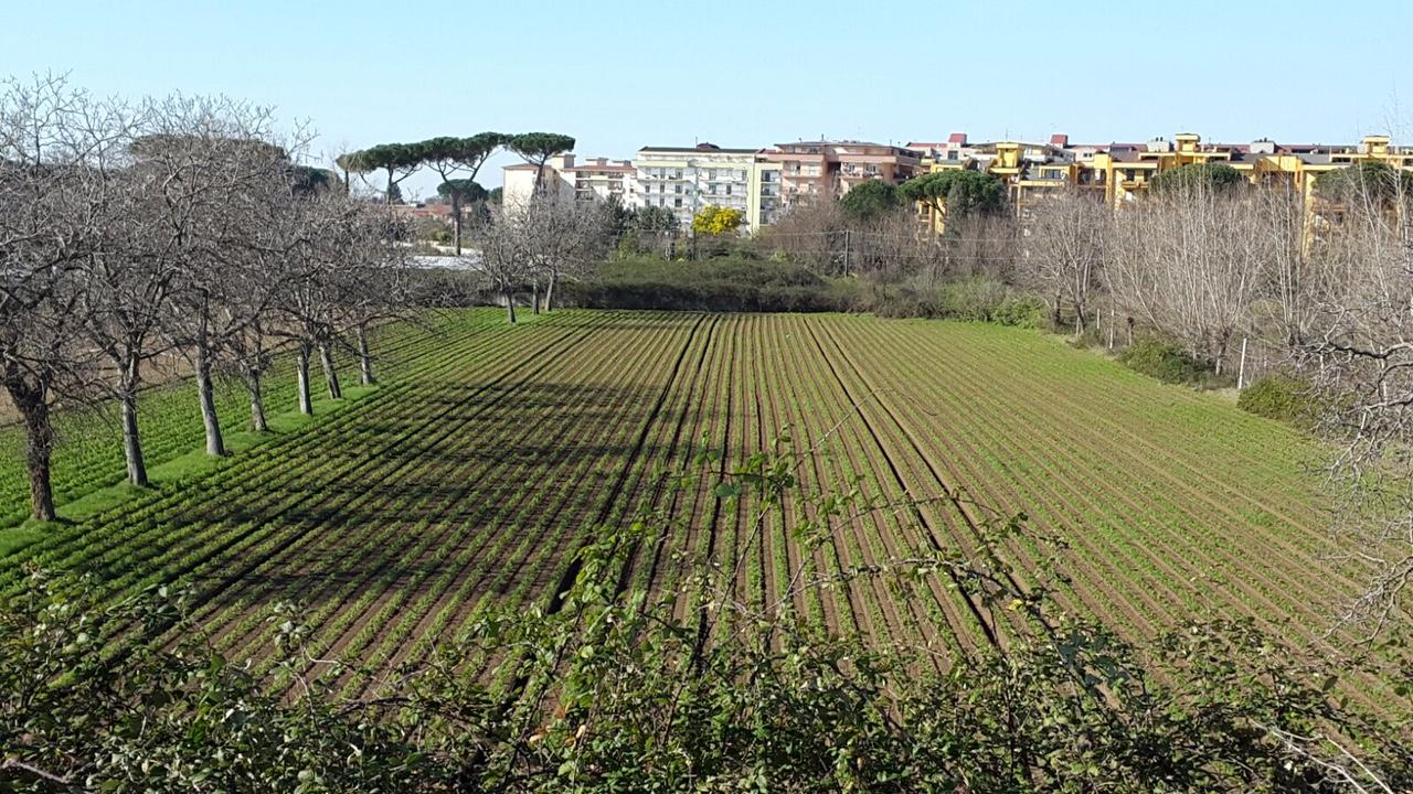 Foto 1 Di Terreno Industriale Caserta ...