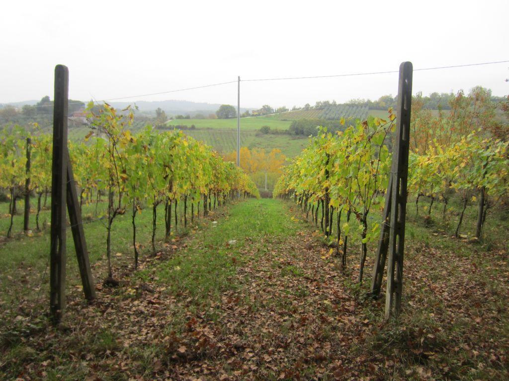 Terreno Agricolo in Vendita a Montevarchi