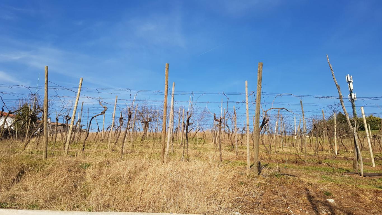 Terreno Edificabile Residenziale in vendita a Monteforte d'Alpone, 9999 locali, prezzo € 180.000 | CambioCasa.it