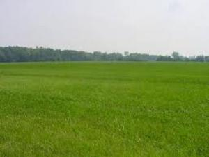 Terreno edificabile in Vendita a Veronella