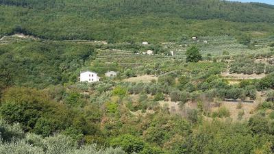 Terreno Agricolo in Vendita a Cazzano di Tramigna