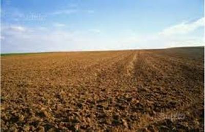 Terreno Agricolo in Vendita a Belfiore