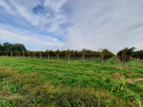 Terreno Agricolo in Vendita a Veronella