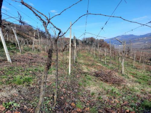 Terreno Agricolo in Vendita a Monteforte d'Alpone