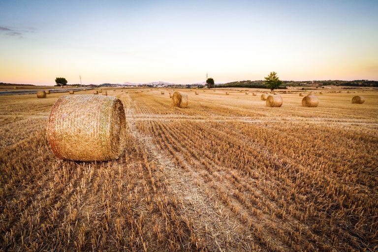 Terreno Agricolo in vendita a Mezzomerico, 9999 locali, prezzo € 52.000   CambioCasa.it