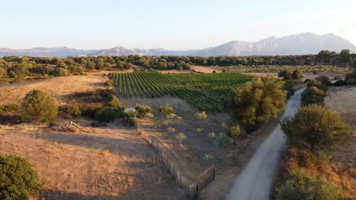 Terreno Agricolo in Vendita a Dorgali