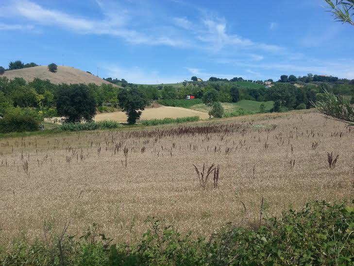 Terreno Agricolo in vendita a Sant'Omero, 9999 locali, prezzo € 99.000   CambioCasa.it