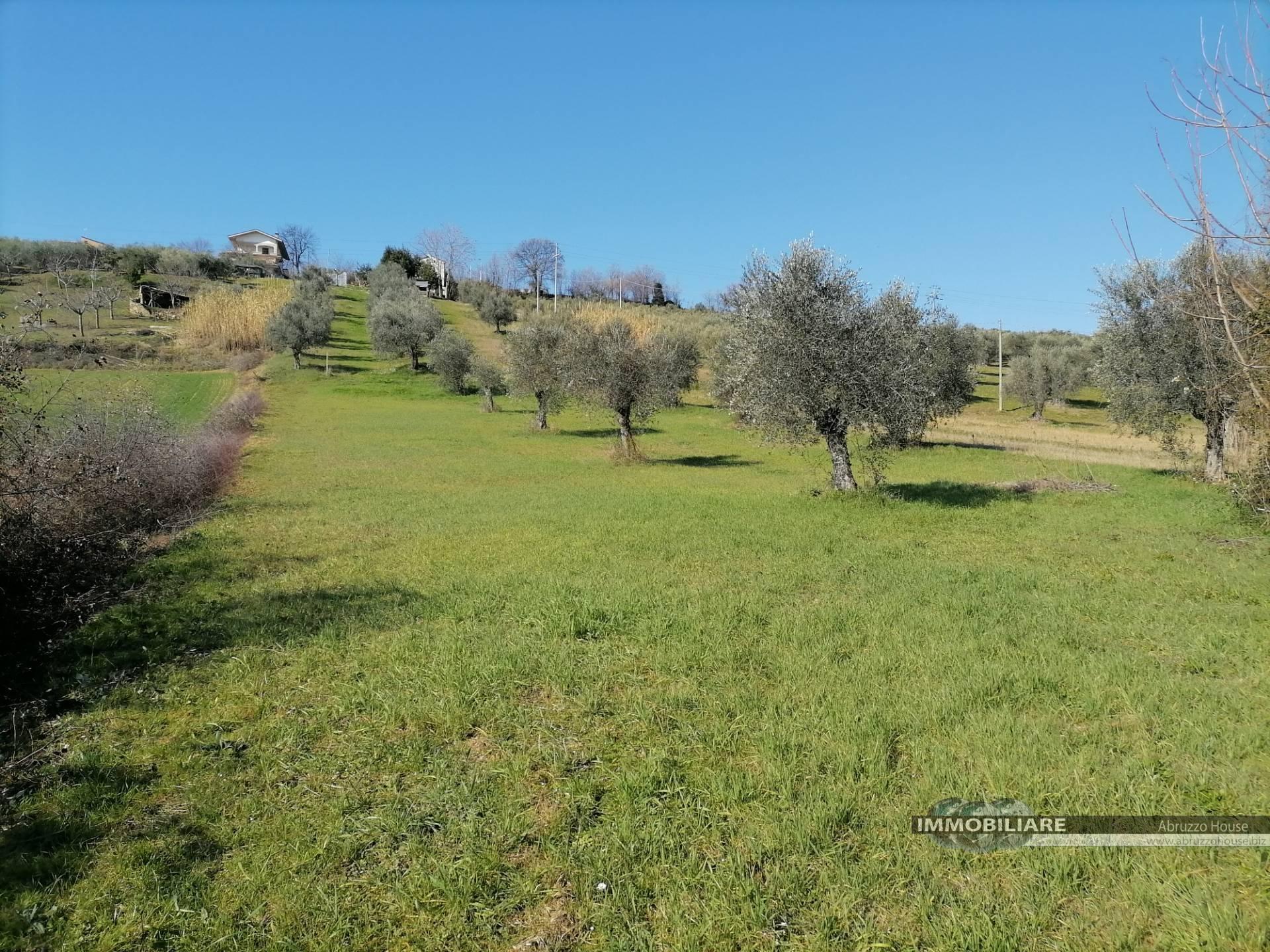 Terreno Agricolo in vendita a Mosciano Sant'Angelo, 9999 locali, prezzo € 28.000 | CambioCasa.it