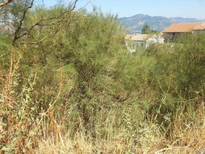 Terreno edificabile residenziale in Vendita a Castiglione di Sicilia