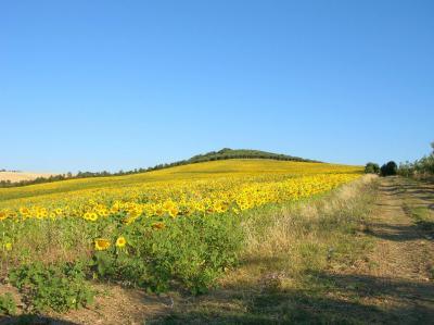 Terreno Agricolo in Vendita a Serracapriola