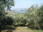 Terreno Agricolo in Vendita a Guardialfiera