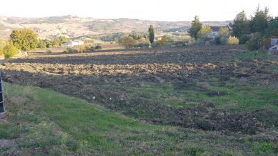 Terreno Agricolo in Vendita a Campodipietra