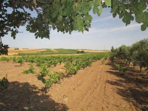 Terreno agricolo in Vendita a Sestu