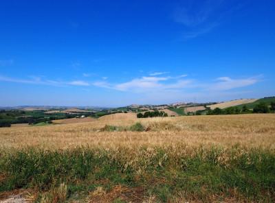 Terreno Agricolo in Vendita a Corridonia