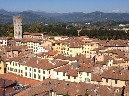 Locale commerciale in Affitto a Lucca