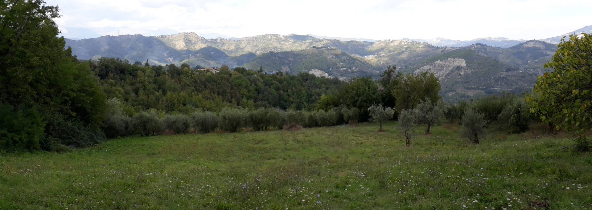 Terreno ASCOLI PICENO vendita  Rosara  Immobiliare Cecco d