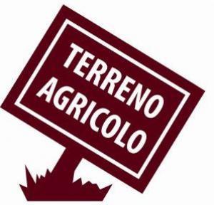 Terreno Agricolo in Vendita a Rovigo