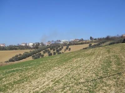 Terreno Agricolo in vendita a Mosciano Sant'Angelo, 9999 locali, prezzo € 155.000 | CambioCasa.it