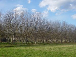Terreno Agricolo in Vendita a Colli del Tronto