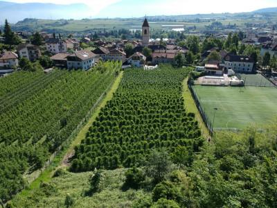 Landw. Grundstück kaufen in Appiano sulla strada del vino - Eppan an der Weinstrasse