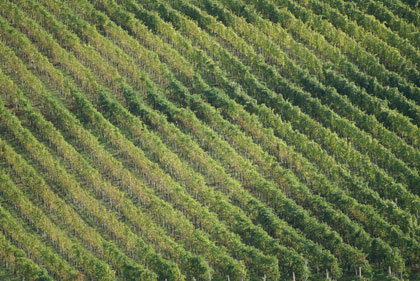 Terreno Agricolo in vendita a Conegliano, 9999 locali, prezzo € 650.000 | CambioCasa.it