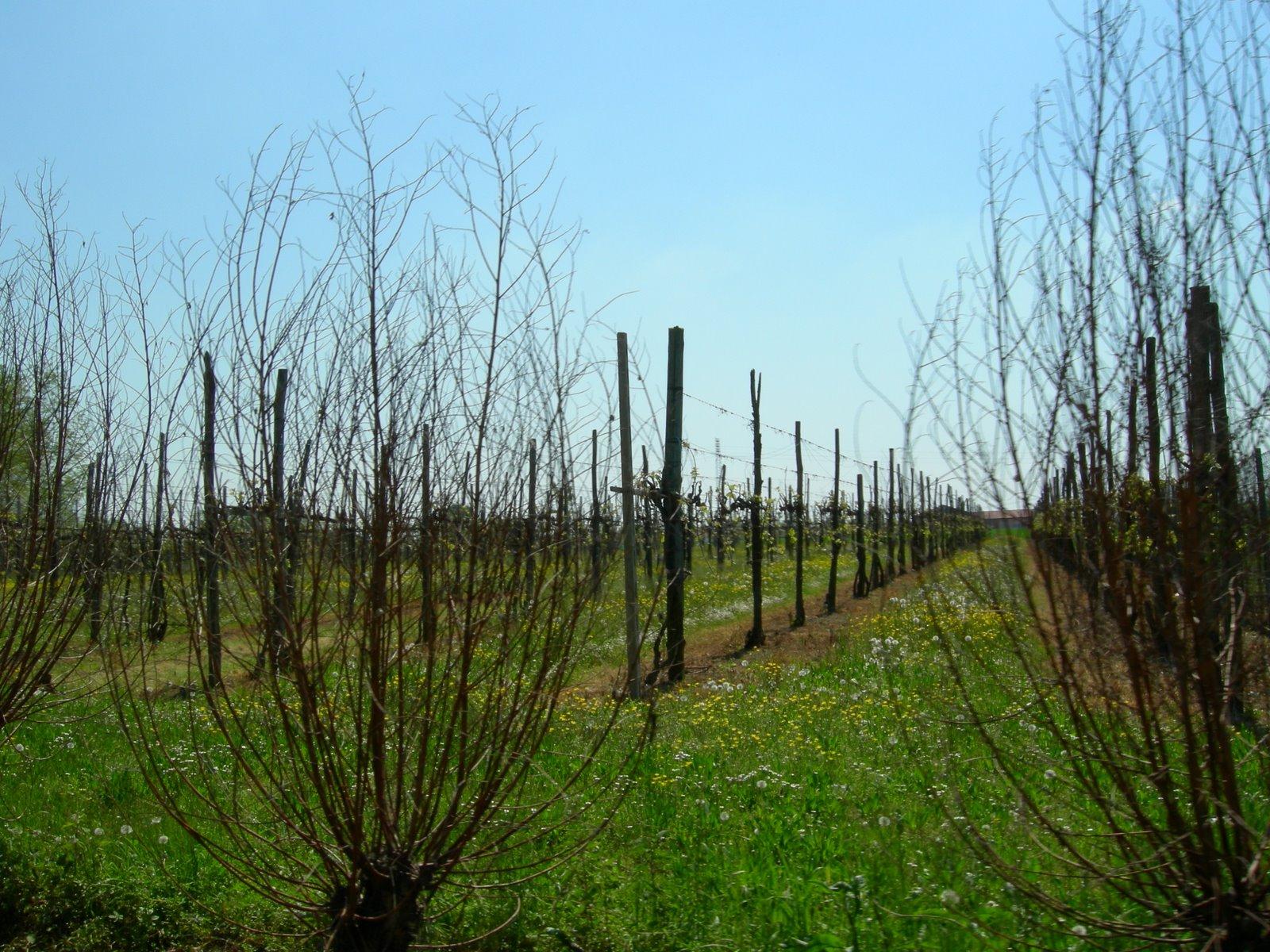 Terreno Agricolo in vendita a Ponzano Veneto, 9999 locali, zona Zona: Merlengo, prezzo € 70.000 | CambioCasa.it