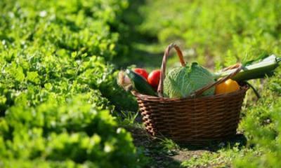 Terreno agricolo in Vendita a Treviso
