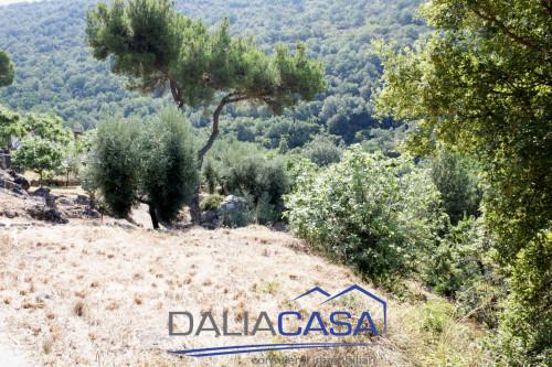 Terreno Agricolo in Vendita a Formia