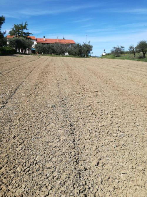 Terreno Agricolo in Vendita a Castorano