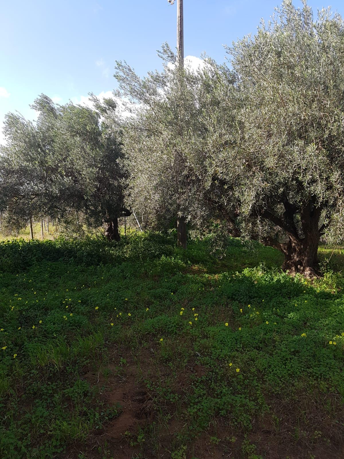 Terreno Agricolo in vendita a Scicli, 9999 locali, prezzo € 15.000   CambioCasa.it