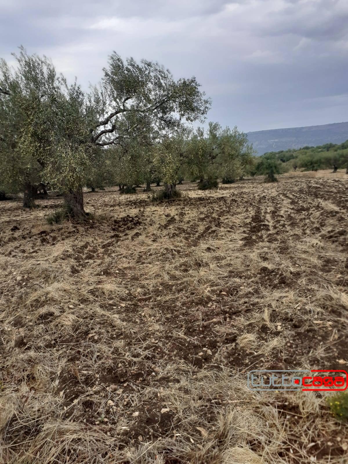 Terreno Agricolo in vendita a Scicli, 9999 locali, prezzo € 12.000 | CambioCasa.it
