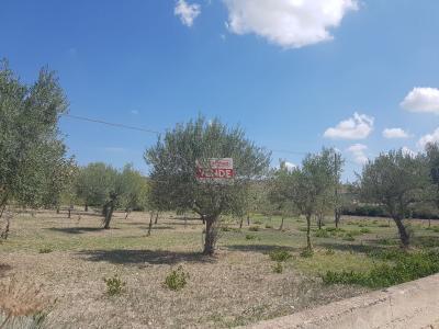 Terreno Agricolo in Vendita a Rosolini