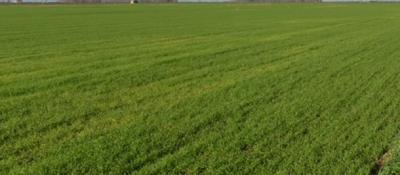Terreno Agricolo in Vendita a Bagnolo San Vito