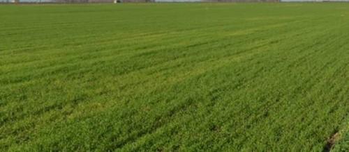 Terreno Agricolo in Vendita a Curtatone
