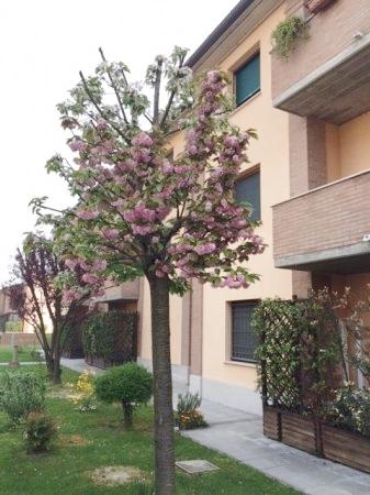 Bilocale Ferrara Via Eligio Mari 1