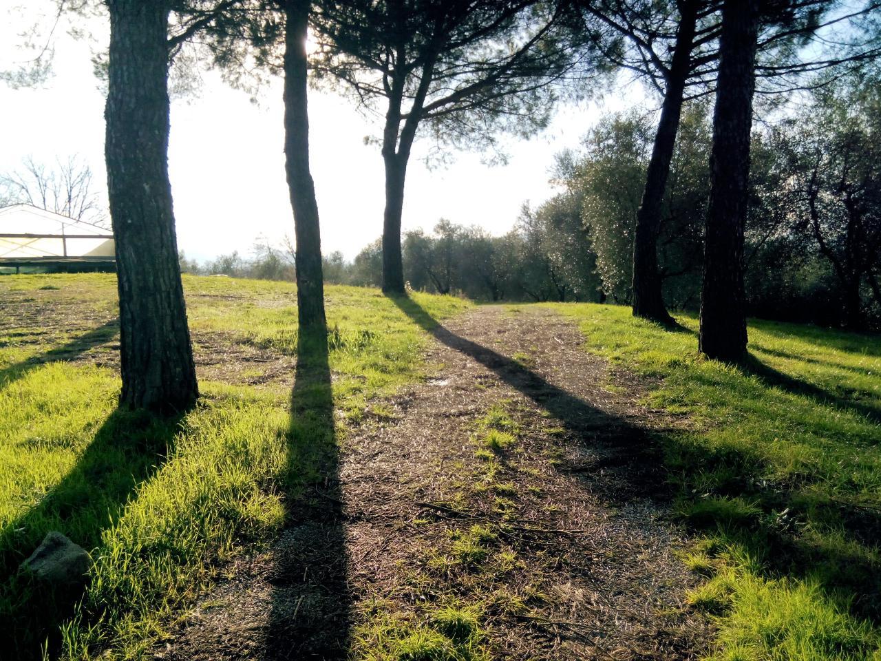Terreno Agricolo in Vendita a Capannori