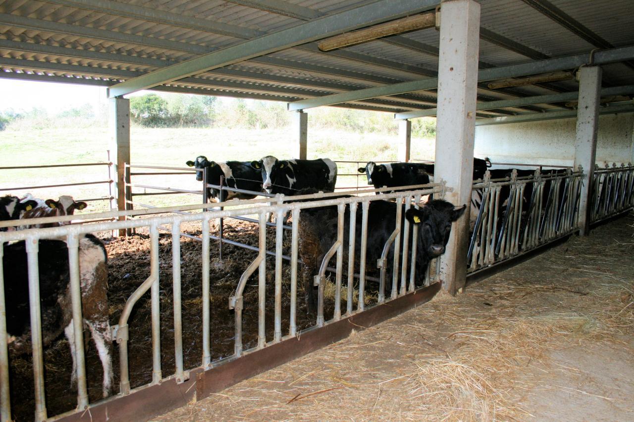 Azienda Agricola in Vendita a Magliano in Toscana
