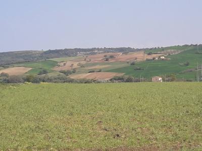 Terreno Agricolo in Vendita a Termoli