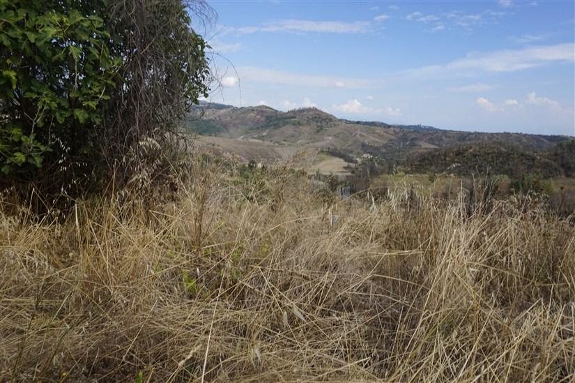Terreno Agricolo in VENDITA a Lattarico