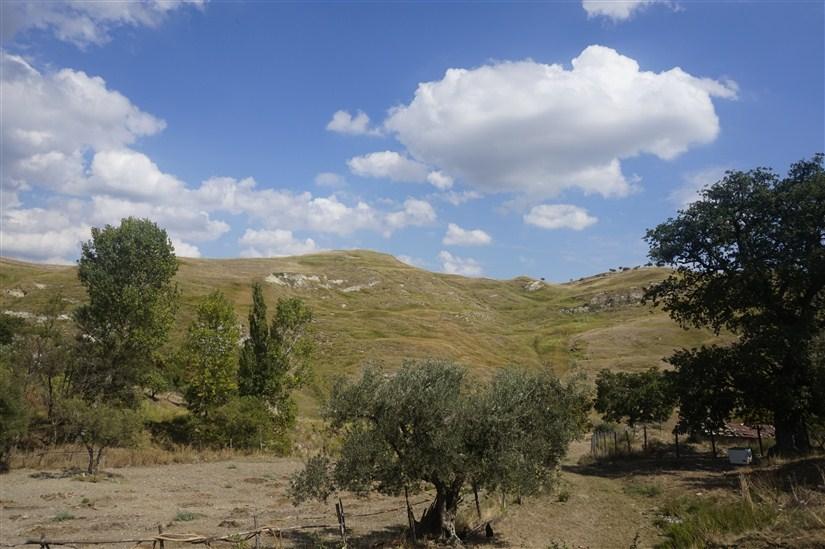 Terreno Agricolo in VENDITA a San Martino di Finita